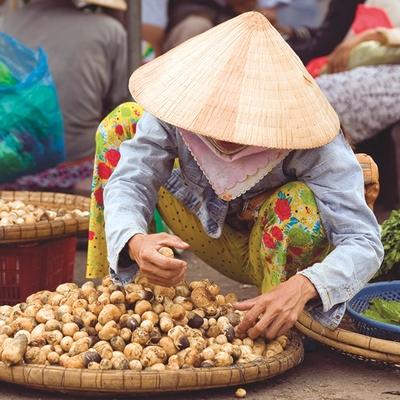 Cruise Vietnam for your honeymoon