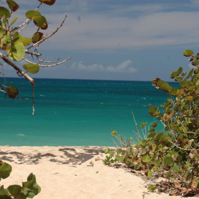 Looking for a last-minute honeymoon destination? Check out Nisbet Plantation Beach Club in the Caribbean