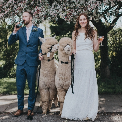 Visit the wedding fair at Charnwood Forest Alpacas in the East Midlands